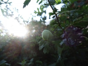 Caterpillar-Sun